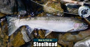 How to Fish for Steelhead in Rivers