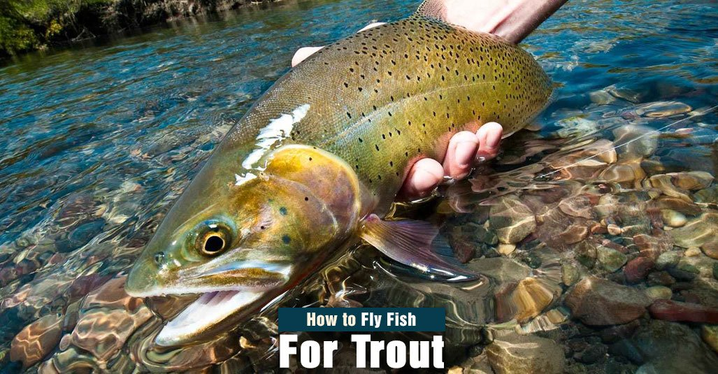 How to Fly Fish for Trout in Lake, River