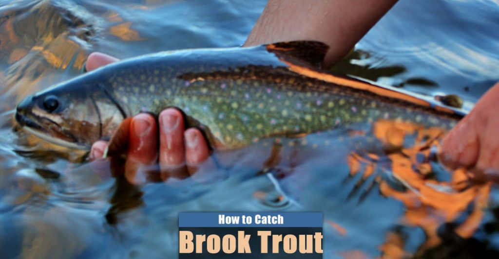 How to Catch Brook Trout in a Lake