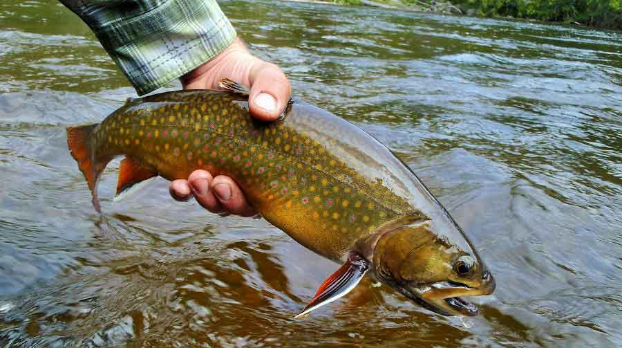 When to Fish Brook Trout